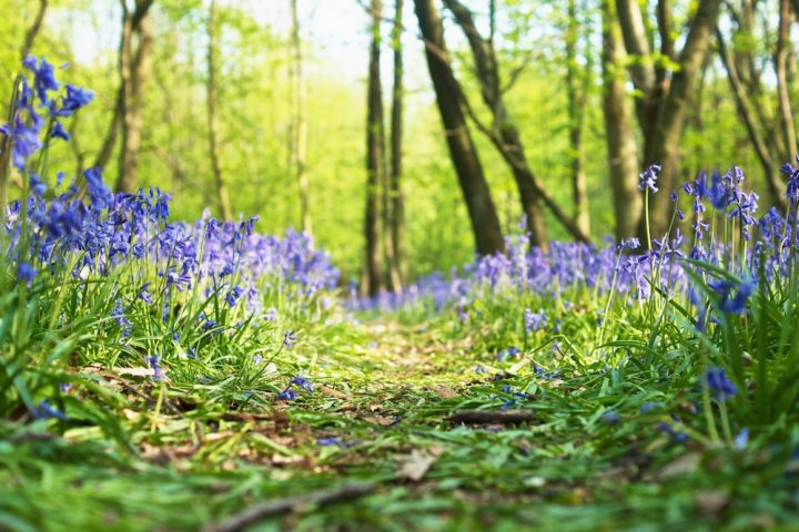 Best bluebell walks in Sussex